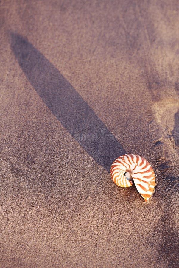 在海海滩的贝壳舡鱼与在日出太阳光下的波浪 图库摄影
