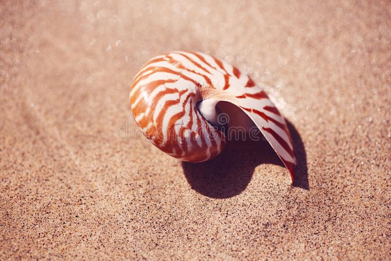 在海海滩的贝壳舡鱼与在日出太阳光下的波浪 免版税库存图片