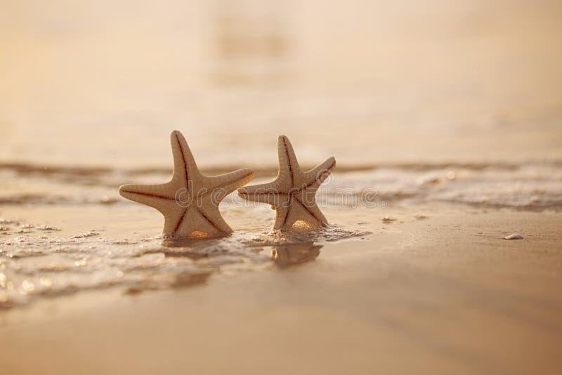 在海海洋的两个海星在佛罗里达,软的柔和的日出靠岸