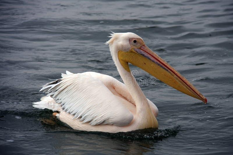 在海湾小船行程walvis附近 库存图片
