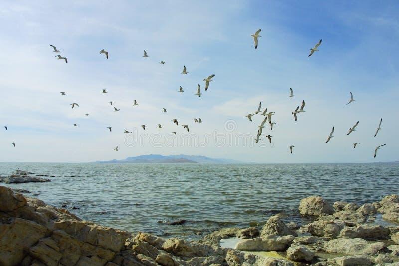 在海湾群之上 图库摄影
