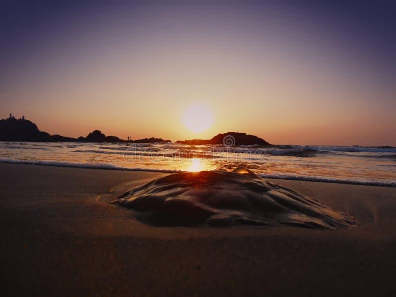 在海滨的死的松包 免版税图库摄影