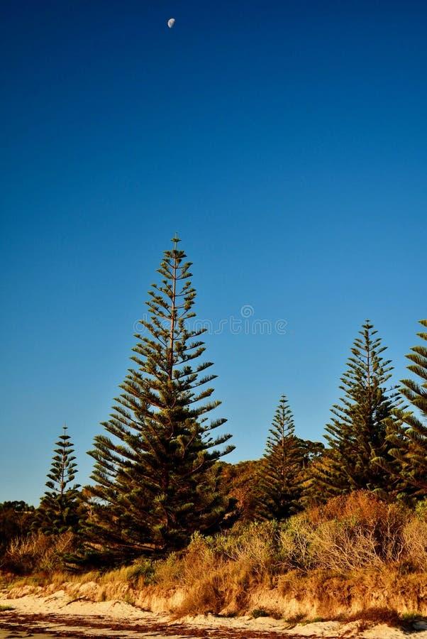 在海滨,新西兰旁边的沙丘;放在土地和海之间沙子的狭窄,但是珍贵的带  图库摄影