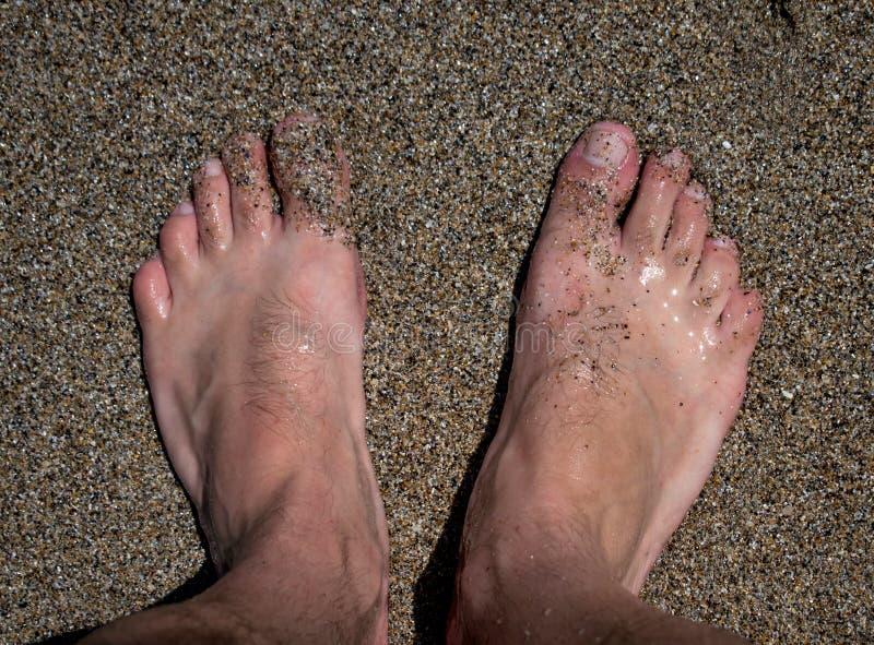 在海滨,赤脚在沙子,在海藻和壳中 免版税库存图片