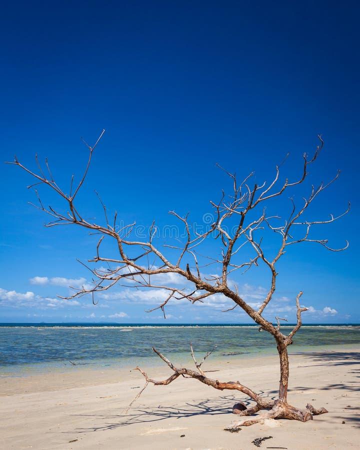 在海滩婆罗洲马来西亚风景的漂流木头树 图库摄影