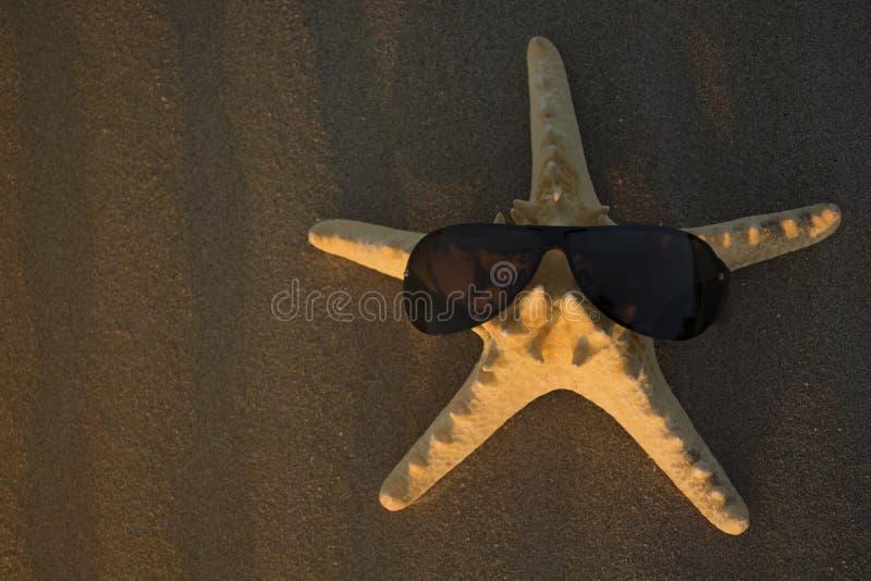 在海滩沙子特写镜头的滑稽的海星 暑假海背景 平的位置,顶视图 库存照片