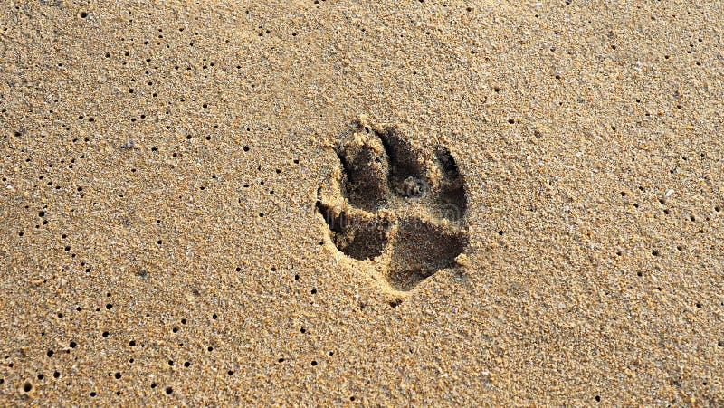 在海滩沙子的狗脚印 自然本底 免版税库存图片