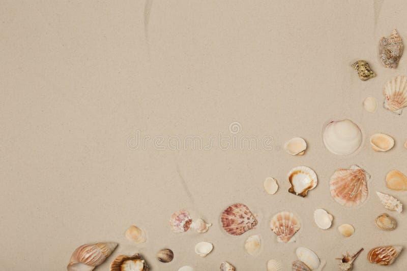 在海滩沙子,顶视图的贝壳 库存照片