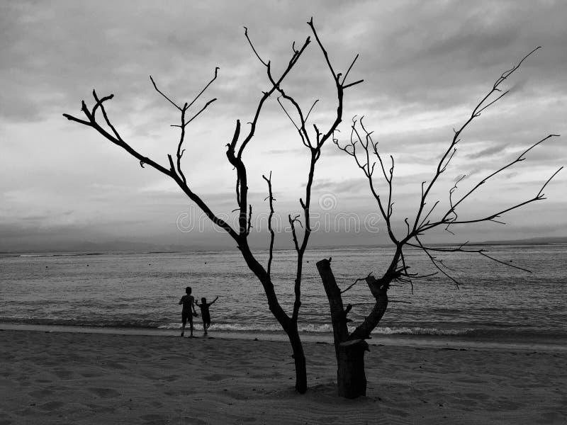 在海滩的下午 库存照片