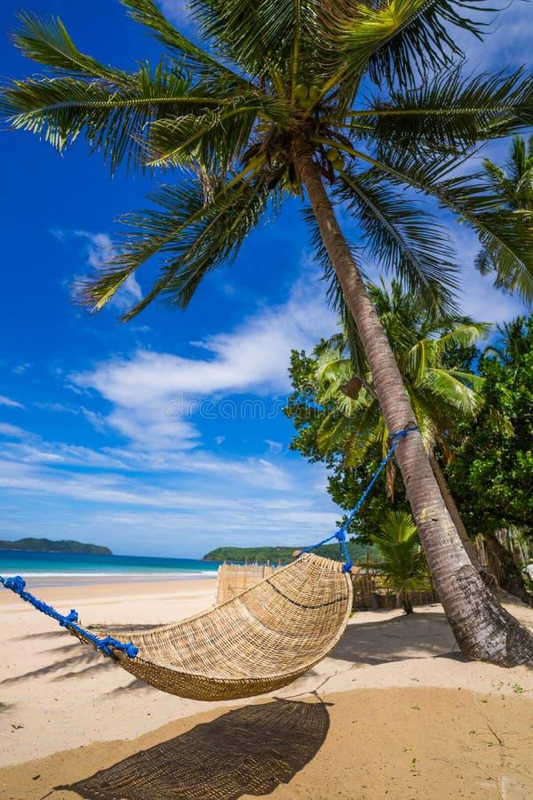 在海滩的吊床被舒展在棕榈之间 免版税库存照片