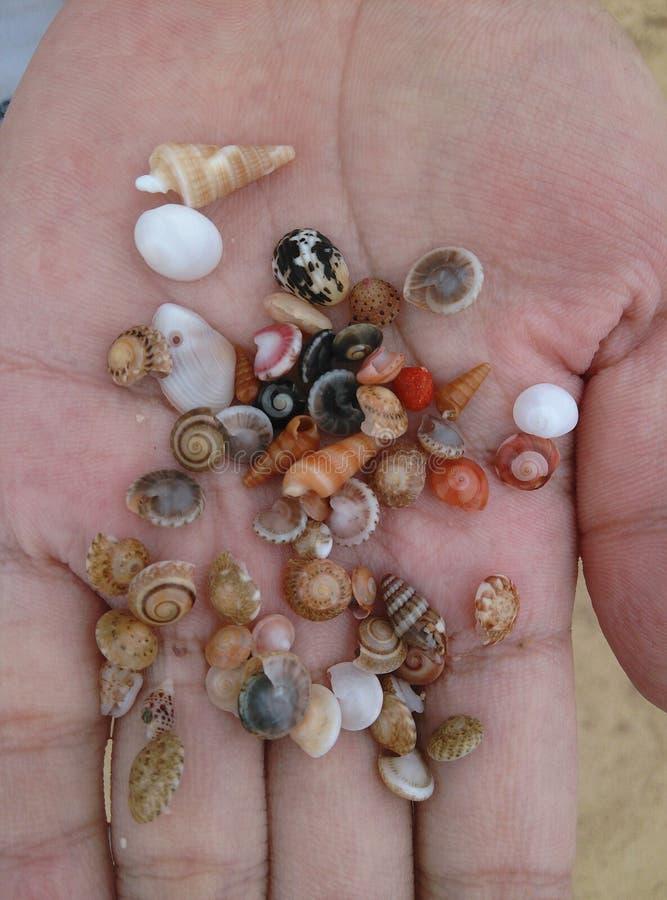 在海滩的壳在三亚,海南在中国 免版税图库摄影