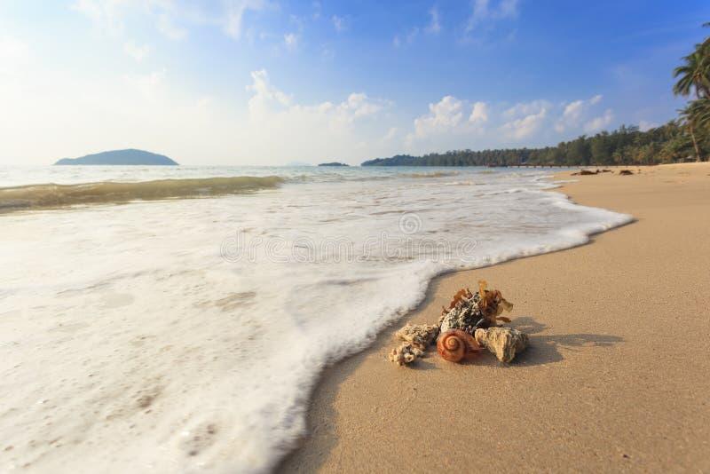 在海滩的壳 免版税库存照片