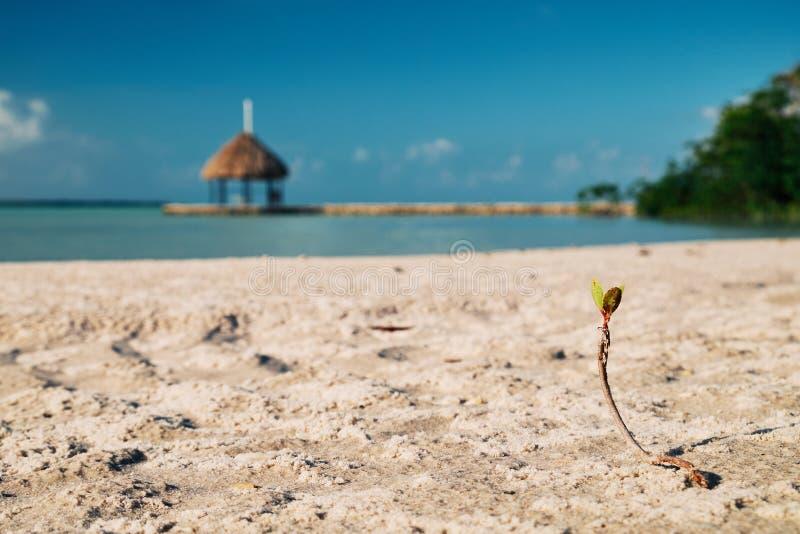 在海滩的新的起点 库存照片