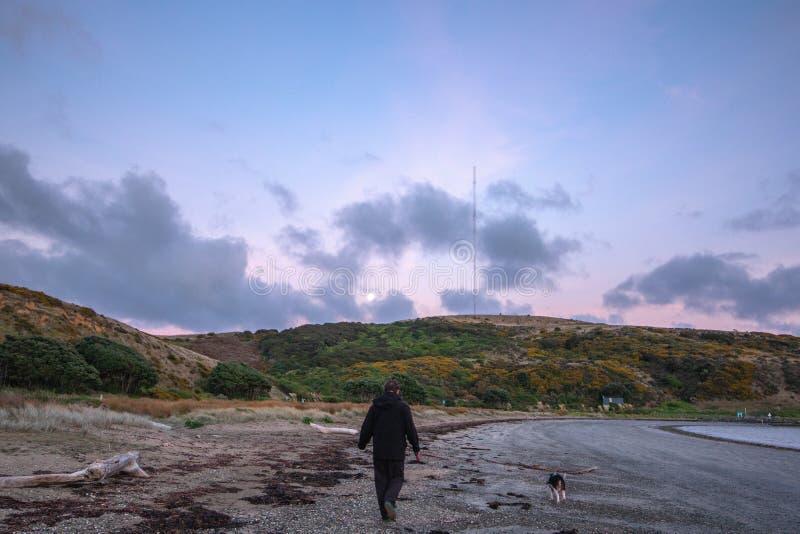 在海滩的日出步行与狗 库存照片