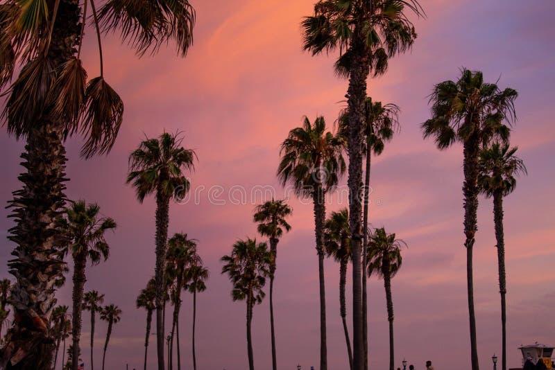 在海滩的日落和棕榈树 免版税库存图片