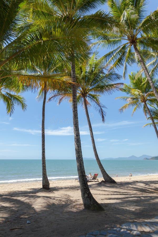 在海滩的棕榈树在天计时在阳光下 图库摄影