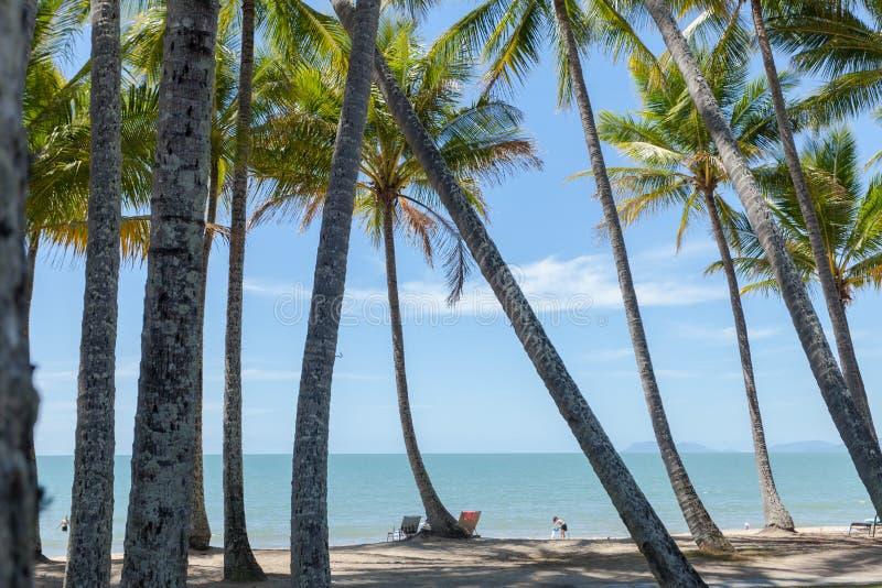 在海滩的棕榈树在天计时在阳光下 库存图片