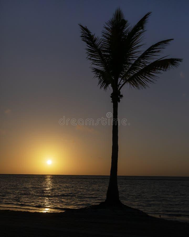 在海滩的棕榈树在日出的加勒比 免版税图库摄影