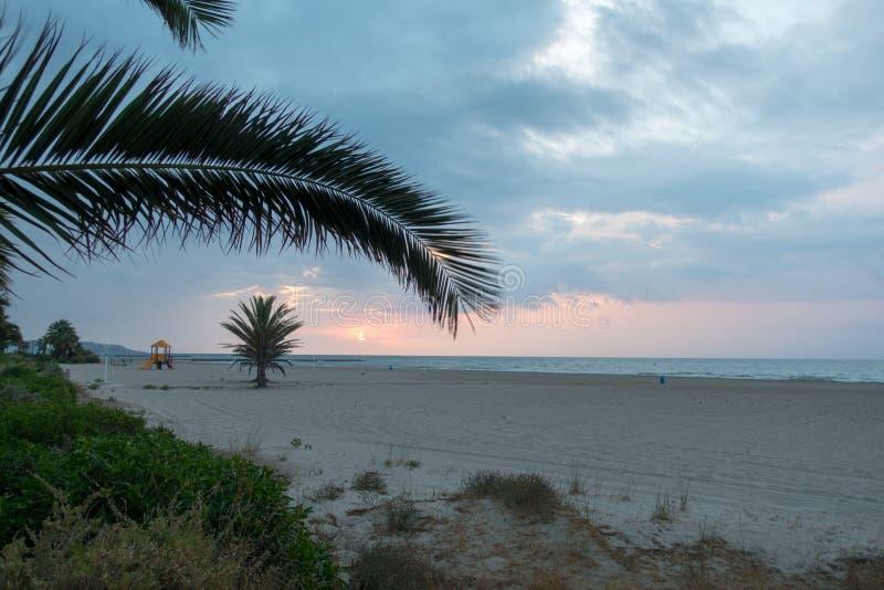 在海滩的棕榈树在美好的日出 图库摄影