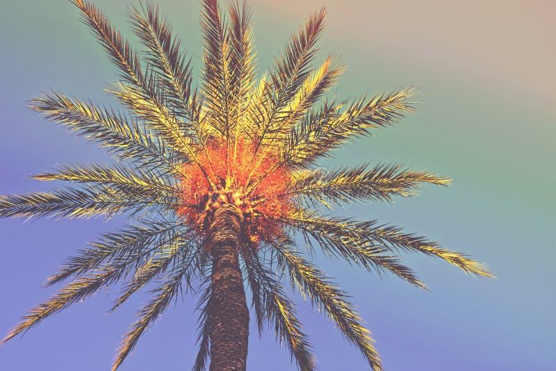 在海滩的棕榈树 低角度射击了与叶子的treeline在五颜六色的天空背景 时髦行家质朴定调子 图库摄影
