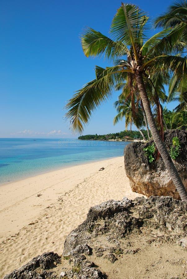 在海滩的棕榈树 免版税库存照片