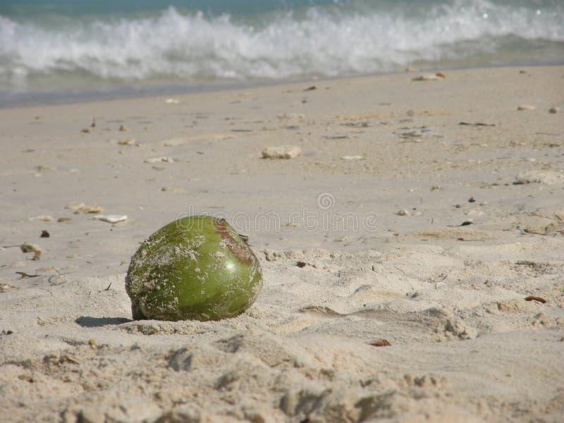 在海滩的椰子在白色海滩,Baru海岛,哥伦比亚 免版税库存图片