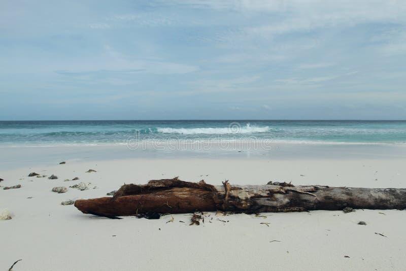 在海滩的死的树在热带海岛 库存照片
