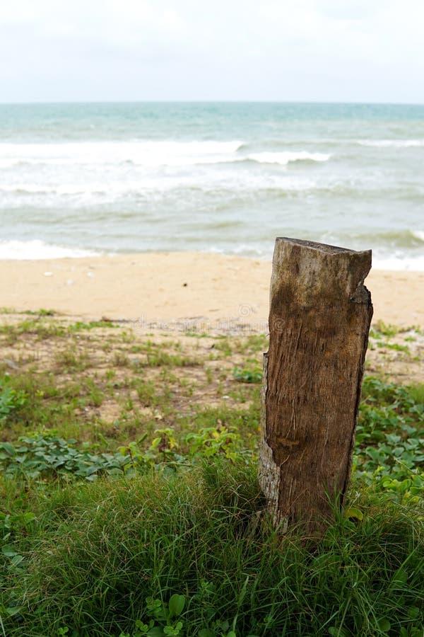 在海滩的死的树桩在中国南方海图象 库存图片