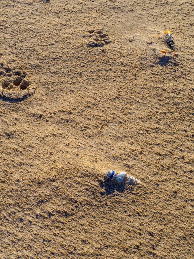 在海滩的沙子塑料埋没的瓶 库存图片