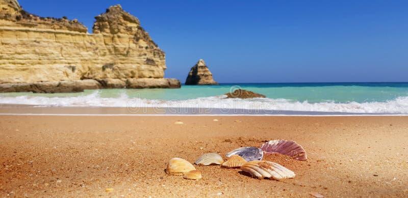 在海滩的海壳在拉各斯,葡萄牙 免版税库存图片