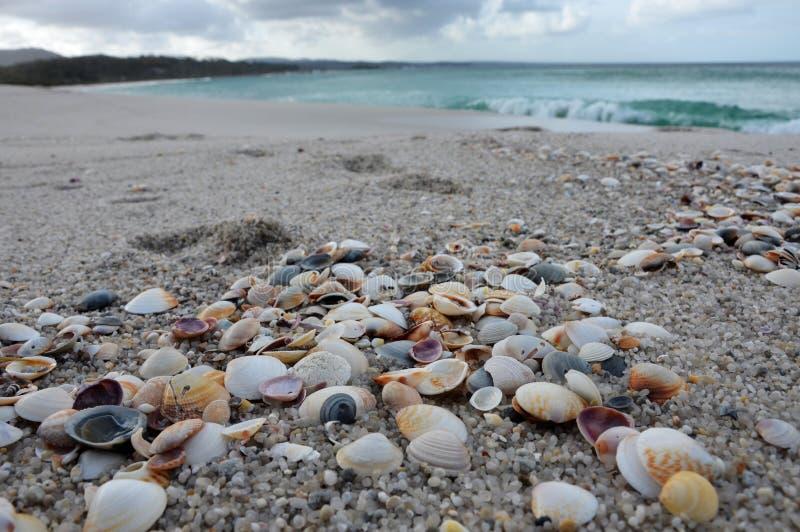 在海滩的海壳 免版税库存照片