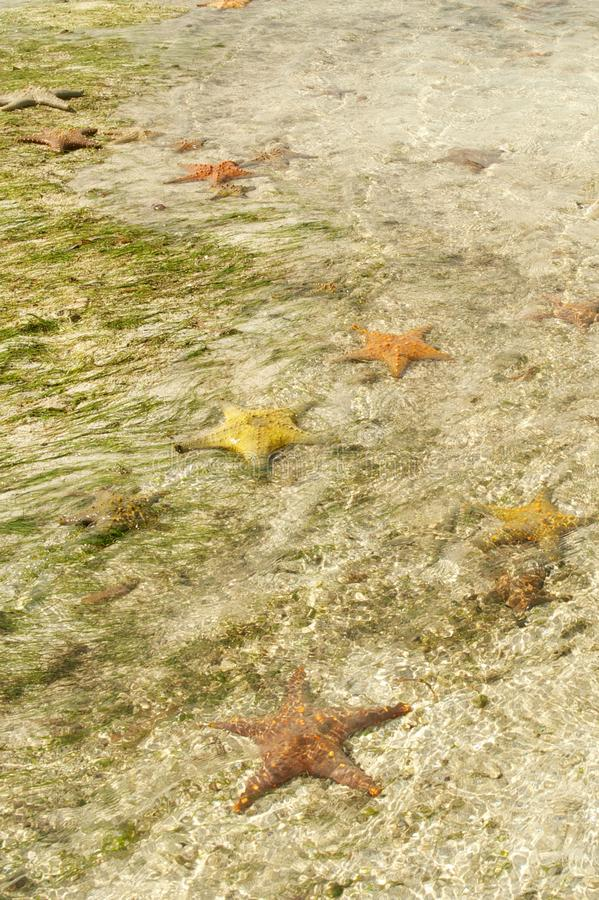 在海滩的海星 库存图片