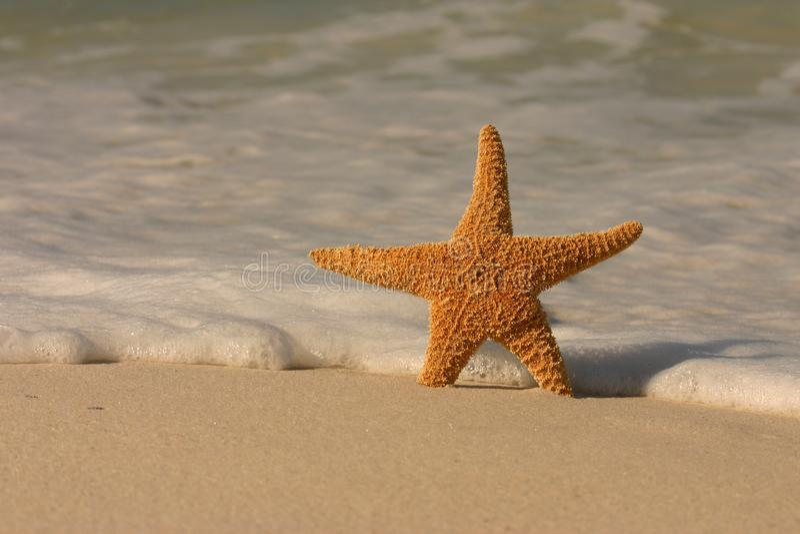 在海滩的海星 库存照片