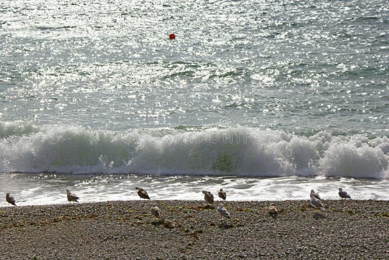 在海滩的海鸥反对波浪和闪闪发光海 库存图片