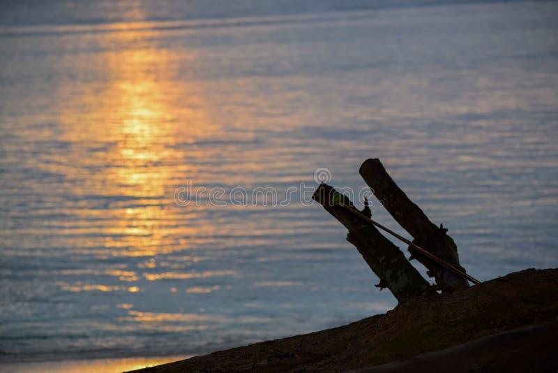 在海滩的漂流木头在风格化紧密sunrset抽象背景的海岸线 库存图片