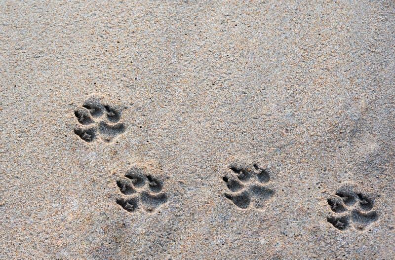 在海滩的狗脚印在禁令Krut海滩,在泰国南部的Prachuapkirikhan的早晨假日 免版税库存照片