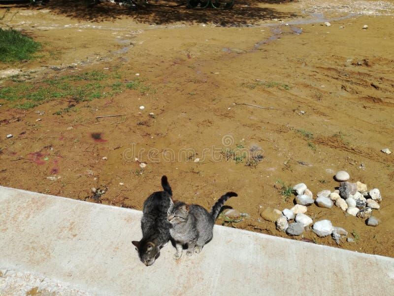 在海滩的猫 免版税库存照片