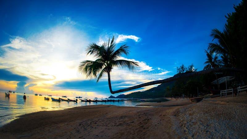 在海滩的美丽的可可椰子树在日落时间 免版税库存照片