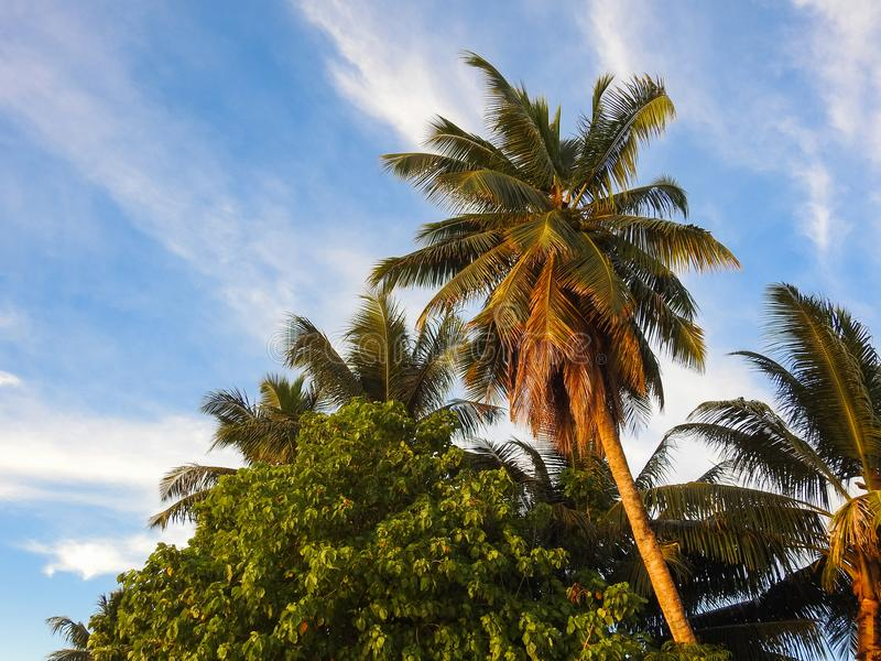 在海滩的美丽的棕榈树拉迪格岛海岛 免版税图库摄影