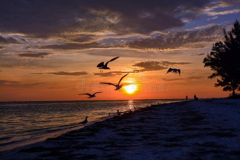 在海滩的美好的佛罗里达日落 图库摄影