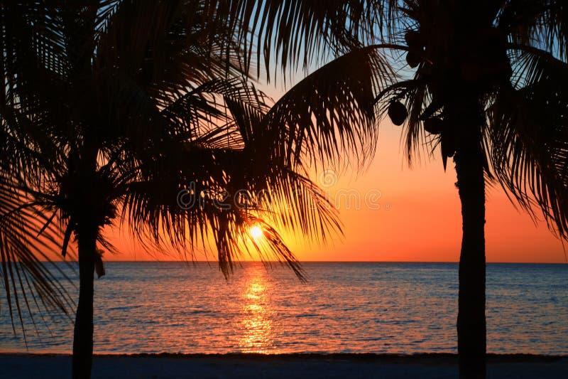 在海滩的美好的日落,太阳审阅下来海在bayshore的两棵棕榈树 四周的安静,休闲 免版税库存图片