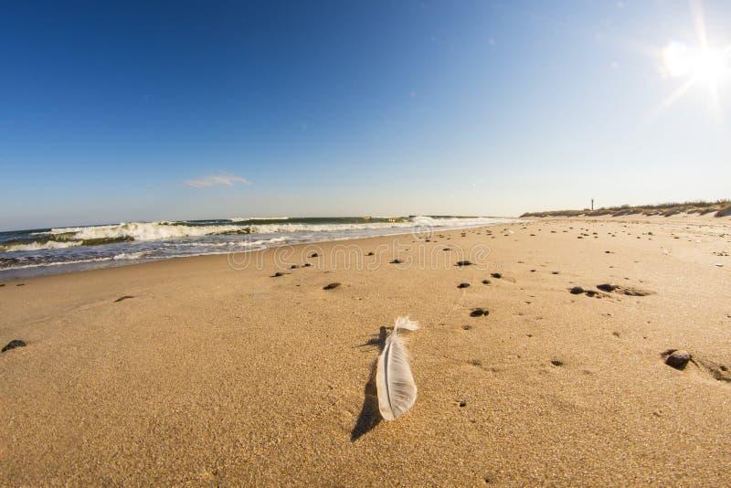 在海滩的羽毛有海浪和天空蔚蓝的波罗的海 库存照片