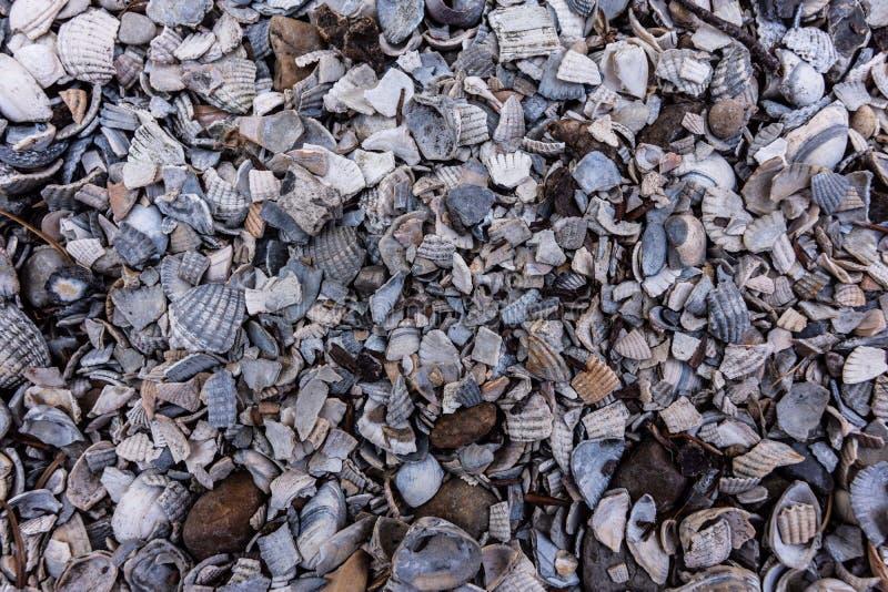 在海滩的贝壳背景 免版税图库摄影