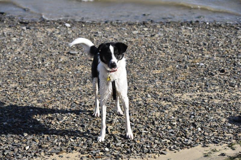 在海滩的Sadied在padstow 图库摄影