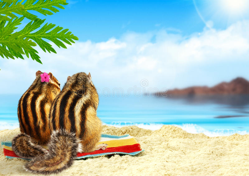 在海滩,蜜月概念的花栗鼠 免版税库存图片