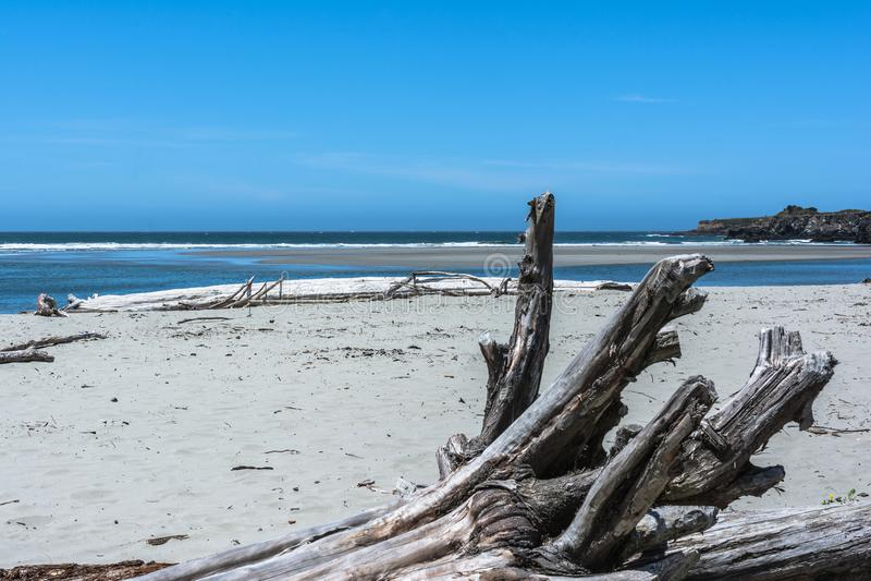 在海滩, Mendocino,加利福尼亚的死的树 免版税图库摄影