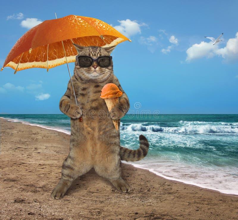 在海滩6的猫 免版税图库摄影