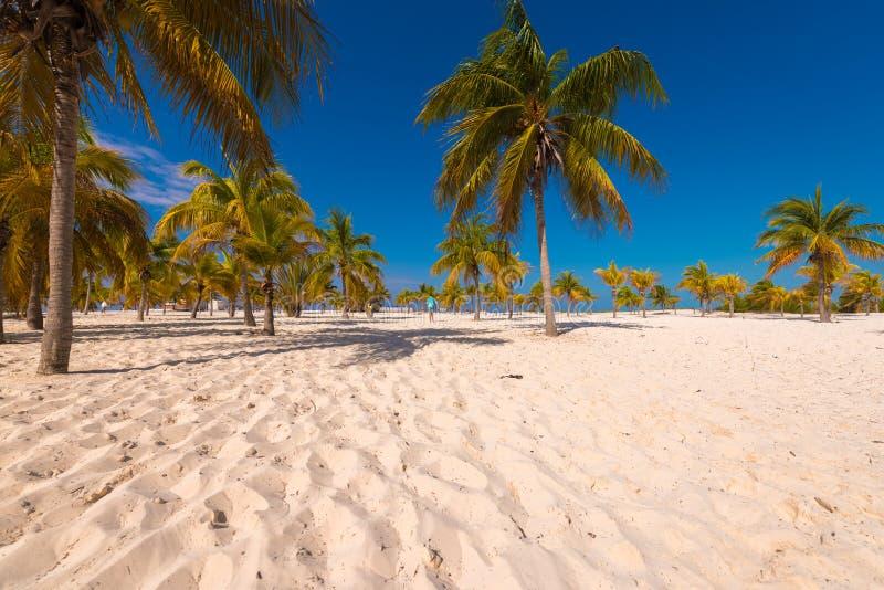 在海滩Playa Sirena,缓慢地Cayo的白色沙子和棕榈树,古巴 免版税库存图片