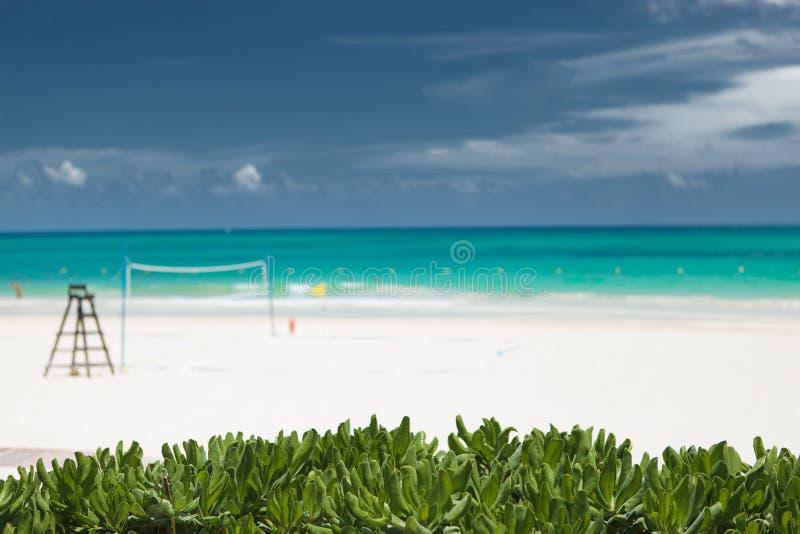 在海滩voley领域的fron的热带植被 免版税库存照片