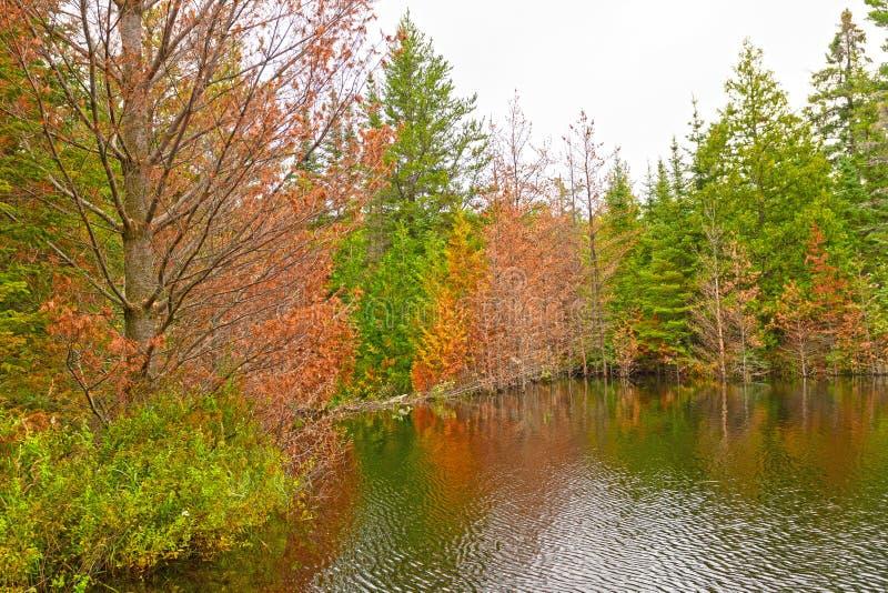 在海狸水坝充斥的湖的秋天颜色 库存图片